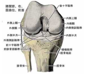 半月板損傷や靭帯損傷による膝の痛み
